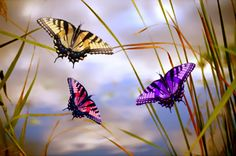 ~ when you see a Butterfly think of me~  I am thankful for every one I see Nicki. Miss you terribly....love you forever !