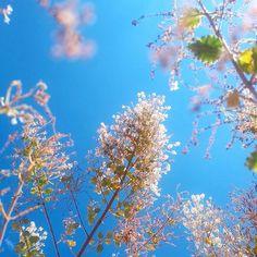 Mirra @emneghamuni . Aviso: Não se enfiem debaixo de um pé de #mirra  tive alergia e espirrei por 2 dias seguidos  #nature #bluesky #splovers #skylovers