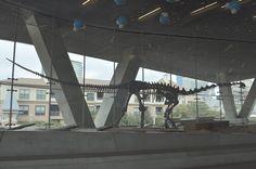 1280px-Perot_Museum_of_Nature_-_Malawisaurus_dixeyi_01.jpg (1280×850) - Dinosauria, Saurischia, Sauropoda, Eusauropoda, Macronaria, Somphospondyli, Titanosauria, Lithostrotia. Auteur : Joe Mabel, 2013.