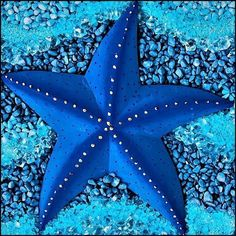 Who knew starfish could come in so many shapes and colors ... and with so many arms!