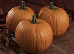 Earlipak F1 pumpkin has that nice deep orange color. Great for home decor!