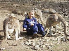 #australia #water #seaworld #goldcoast#currumbinwildlifesanctuary#kangaroo #wildlife #sanctuary #beautiful #view #lovely #movement #waterworld #world #tour #likes4likes #pic #picture #photo #photographylovers #likes4likes #likeforlike #feeling #like4like #likeforlike #l4l #likes #likesforlikes #likes4likes #instagood #instadaily #instalike #instanature by lovetotravelwithari http://ift.tt/1X9mXhV