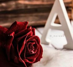 Alphabet Latin, Alphabet Names, Alphabet Wallpaper, Name Wallpaper, Red Flowers, Red Roses, Book Flowers, Stylish Letters, Alphabet Letters Design