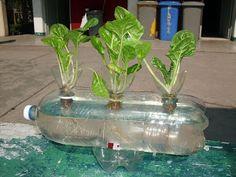 Bidon plastico con agua, plantas listas para transplantarlas.