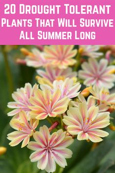 You'll be glad to hear there is a fantastic array of succulents, grasses, and flowers that thrive in low-water conditions. Check out these 20 beautiful drought tolerant garden plants: Pool Garden, Garden Yard Ideas, Lawn And Garden, Garden Beds, Easy Garden, Growing Flowers, Growing Plants, Planting Flowers, Flowers For Planters