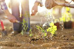Troca de dias - prática que garante a sobrevivência de muitas famílias - Artigos CPT