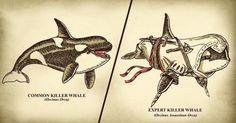 Expert Killer Whale. :D