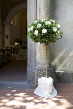 Buxus con peonie bianche fuori dalla chiesa - Buxus with white peonies outside the church