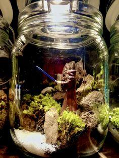 Terrariums of the Galaxy Terrariums, Aquarium, Decor, Goldfish Bowl, Decoration, Aquarium Fish Tank, Terrarium, Aquarius, Decorating