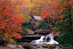 Autumn Maples...Bright red maple trees surrounding a mystically beautiful waterfall.