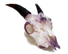 Goat Skull - Ram Skull - Crystallized Skull - Animal Skull - Taxidermy - Real Animal Skull - Animal Bones - Animal Skull Decor