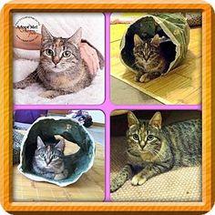 Marlton, NJ - Domestic Shorthair. Meet Molly, a cat for adoption. http://www.adoptapet.com/pet/9451653-marlton-new-jersey-cat