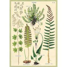 Vintage-Inspired Poster – Freckled Hen Vintage Botanical Prints, Vintage Prints, Vintage Posters, Botanical Drawings, Botanical Art, Cactus, Retro Poster, Bohemian Tapestry, Vintage School