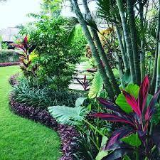 North Queensland Garden Plants Google Search Tropical Landscape Design Tropical Garden Design Beautiful Gardens