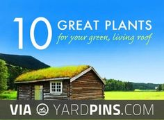 Awesome -  | Check out some great ideas for new perennials over at yardpins.com | #perennials #perennialplants #annuals #biennials #gardens #gardening #botany #horticulture #flowers #trees #plants