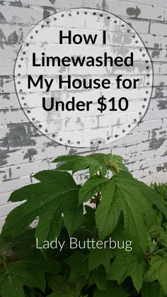 My House, Plant Leaves, Outdoors, Lady, Garden, Plants, Poster, Design, Outdoor