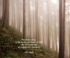 """...the trees and we are essentially identical."" Carl Sagan"