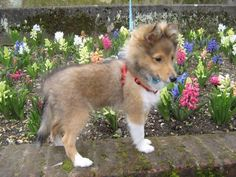 And here's Woody at 12 weeks. By Robert Bray
