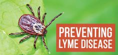 Be aware of the risks of Lyme disease for the summer season - when the infection is most frequently transmitted through tick bites.