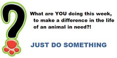 Never be too busy to JUST DO SOMETHING to better or save the life an animal in need.