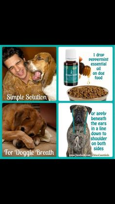 Peppermint essential oil for dogs bad breath!