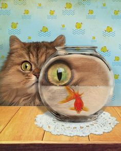 Cat fish 8X10 by jhovenstine on Etsy