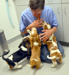 My vet cannot resist sitting in the floor and playing with my Basset Jake. He's a great vet. Basset Puppies, Hound Puppies, Basset Hound Puppy, Cute Puppies, Cute Dogs, Dogs And Puppies, Beagles, Doggies, Dog Pictures