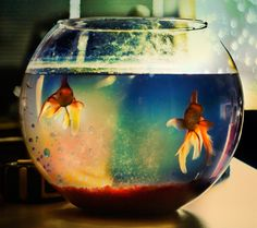 Two lost souls swimming in a fish bowl Pink Floyd Wish You Are Here, Red Fish, Favim, Aquarium Fish, Pink Floyd, Pretty Pictures, Beautiful Creatures, Art Photography, Glass