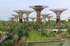 super trees. These are towering structures that range in height from 82 feet to 160 feet. They serve as vertical gardens containing a vast array of orchids, bromeliads, vines and ferns. They contain structural features that allow for the collection of rainwater for irrigation purposes and photovoltaic cells to turn the sun's rays into electricity.