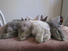 Bunny butts!