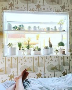 garden window-bedroom-succulents