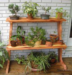 Plant Shelf - Dawn Redwood (from Kyle)