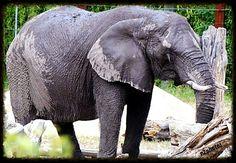 Norfolk Virginia Zoo