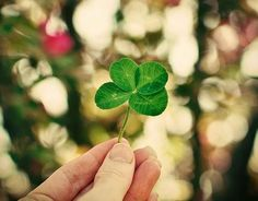 I want to find a 4 leaf clover before I die.