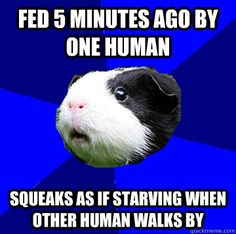 Fed 5 minutes ago by one human Squeaks as if starving when other human walks by