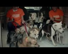 Adeevee - Dogswell: Unleash the Happy