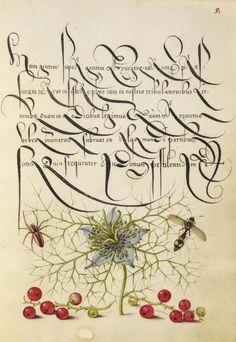 Joris Hoefnagel, illuminator, Georg Bocskay, scribe, pages from Mira Calligraphiae monumenta, 1561/96