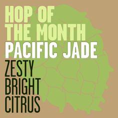pacific jade hops
