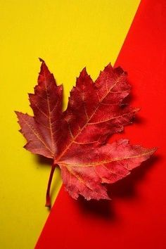 Autumn~✿ڿڰۣ Red and Yellow
