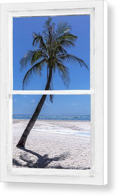 Palm Tree #Tropical #Window #Art View by James BO Insogna - #insognaGallery