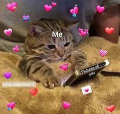 Memes Heart Cartoon Ideas For 2019 Cute Cat Memes, Cute Love Memes, Funny Memes, Cute Cats, Funny Cats, Memes Amor, Memes Lindos, Heart Meme, Crush Memes