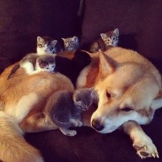 image drole - Un chien et ses chatons