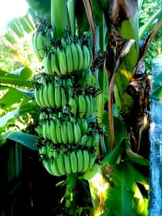 Perfect time to plant tropical fruit trees in South Florida | Ready-To-Grow Gardens