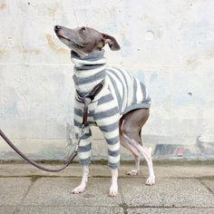 Dies ist ein dickes und plump Horizontal gestreift lange Hülse Vlies-t-Shirt.  In Anbetracht der Kurve des Körpers und das Skelett hat es soll sogar Iggy aktiven Bewegung zu unterstützen.  Für das Material ist das höchste Qualität-Vlies hergestellt in Japan Adoted.  Es ist fleischig und plump Italian Greyhound Clothes, Italian Greyhound Puppies, Puppy Coats, Animal Projects, Animal Quotes, Dog Accessories, Dog Pictures, Yorkie, Fur Babies