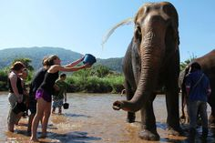 """""""So what did you do over winter break?"""" """"I just got to hang out with some local elephants in Thailand. No big deal. Thailand Elephants, Koh Samui Thailand, Have Time, Hanging Out, Big, Winter, Animals, Winter Time, Animales"""