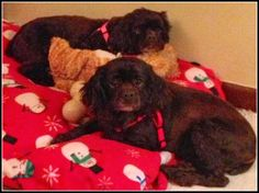 Please Help! If you live in IA, MN, or WI, and are interested in adopting Cami and Molly...