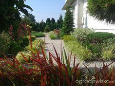 Metamorfozy ogrodowe - strona 177 - Forum ogrodnicze - Ogrodowisko