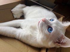 Cats透き通った目線の先は何?(たぶんニボシ)