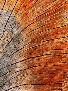 Natural Curves - Sally Green Love the textures Wood Texture, Natural Texture, Patterns In Nature, Textures Patterns, Wood Bark, Natural Curves, Tree Bark, Earth Tones, Natural World