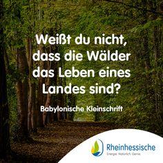 Im Wald herrscht eine einzigartige Atmosphäre! 🌲#Zitate #Sprüche #BabylonischeKleinschrift #Wald #Naturschutz Woodland Forest, Quotes, Life